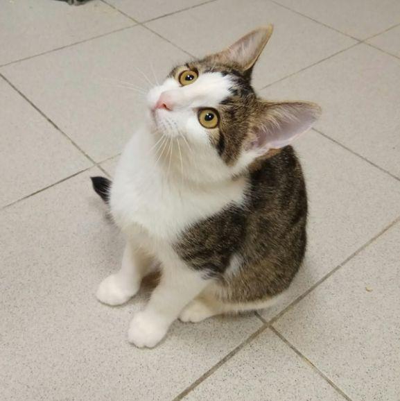 4 месяца, котёночек Лола, с глазами цвета янтаря, в дар