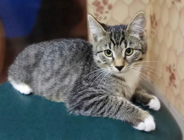 Тиграша-шикарный, 4 месяца, мальчик в добрые руки
