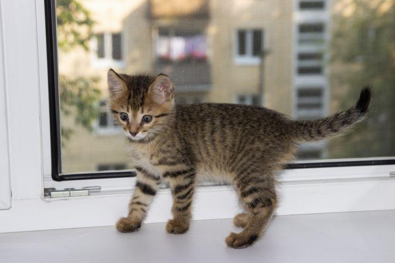 Тигровый мальчик, 3 месяца