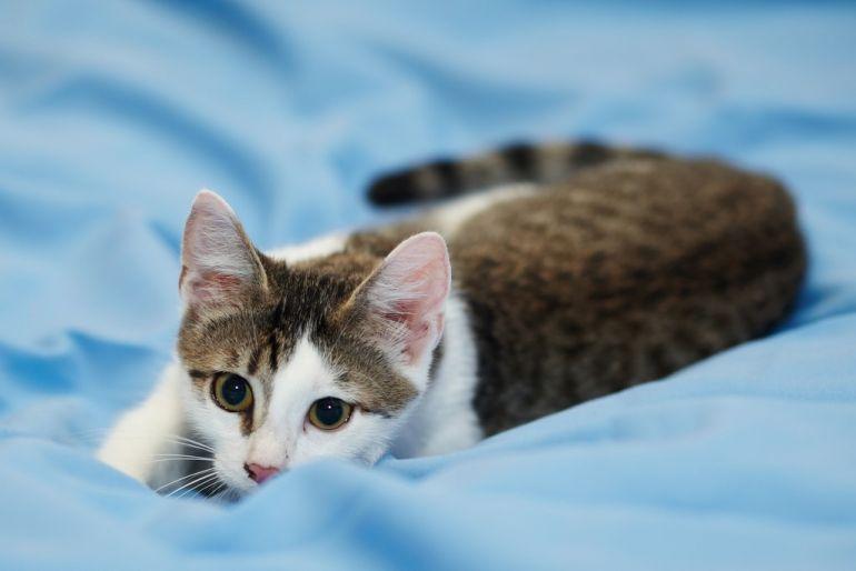 Очень ласковый котёнок Арсений ждёт хозяина