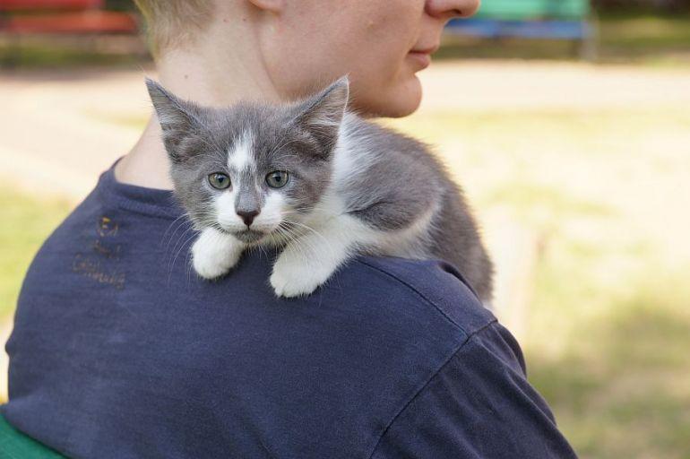 Котёнок-пострелёнок (1,5 месяца)