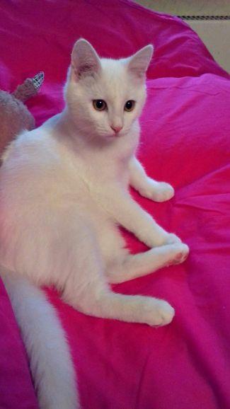 Ищет дом белый котёнок Снежок