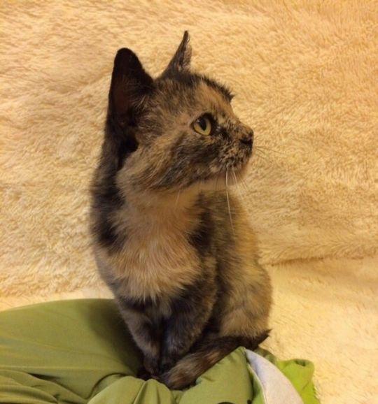 Кошка Корица ищет дом