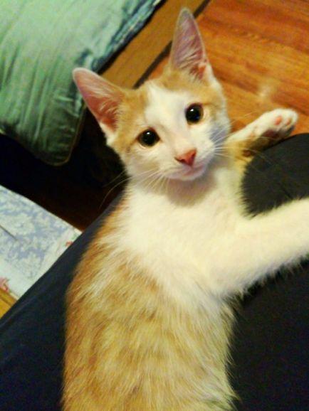 Смышлёный котёнок Рыжик ищет дом
