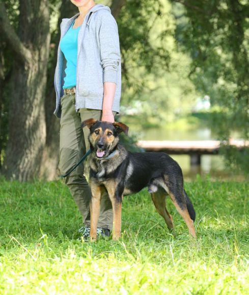 Неотразимый Макс, молодой пёс в добрые руки