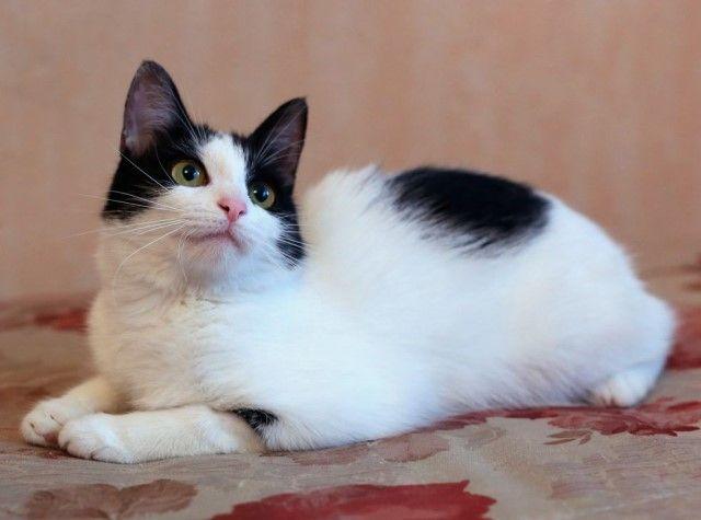 Нежное маленькое чудо по имени Сима. Молоденькая кошечка, 9 месяцев, в дар