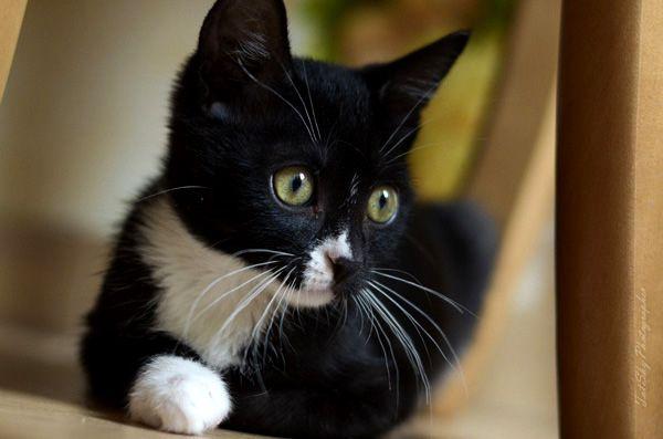 Красавчик Тимоша, возраст 3 месяца, котёнок в дар