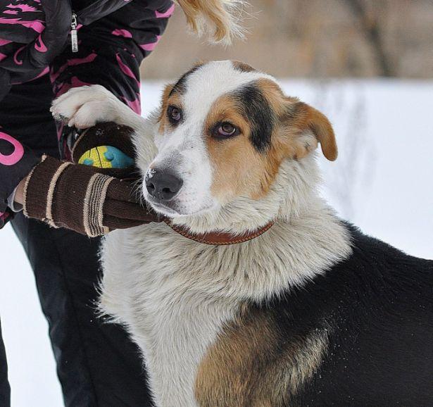Роскошный молодой пёс в дар