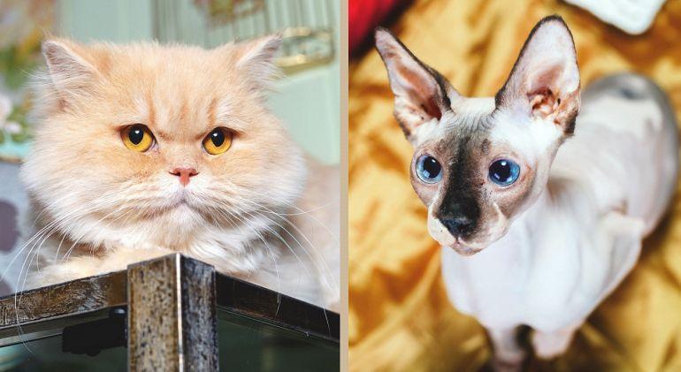 Большие друзья - котик и кошка ищут один дом на двоих