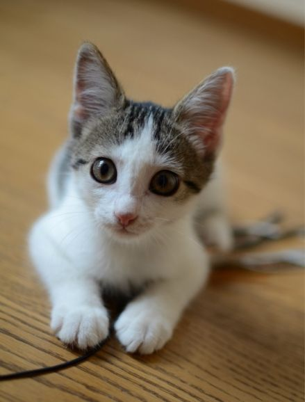 Милый котёнок в дар