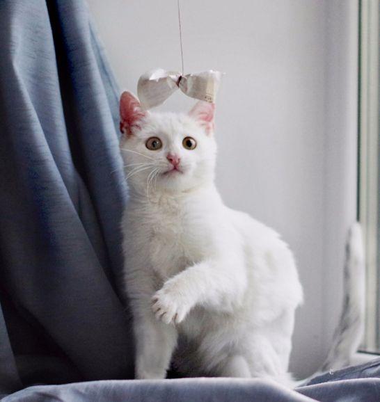 Невероятно красивый котёнок Айс ищет дом