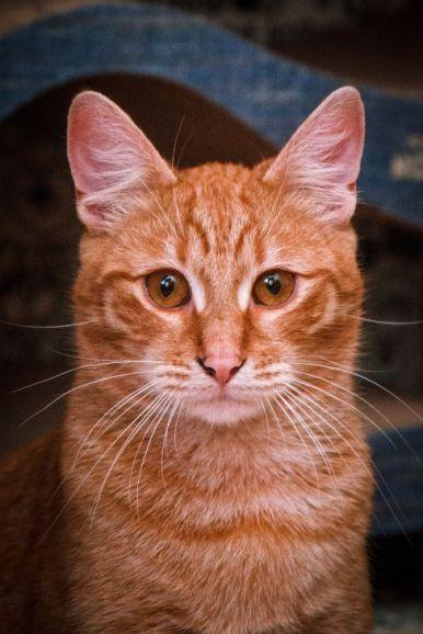 Рыжий котик Элвис ищет самую лучшую семью