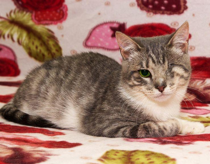 Одноглазый котёнок Шурик мечтает о доме