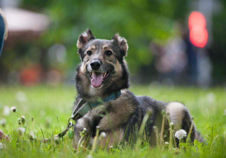 Позитивный пёс Валли ищет заботливые руки