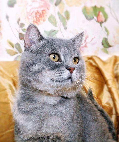 Котик Шуберт в пушистой шубке хочет найти домашний уют
