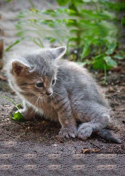 Котёнок Соня в добрые руки, в дар