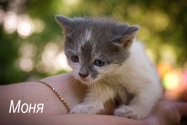Котёнок Моня в добрые руки, в дар