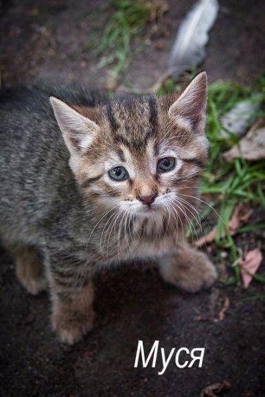 Котёнок Муся в добрые руки, в дар