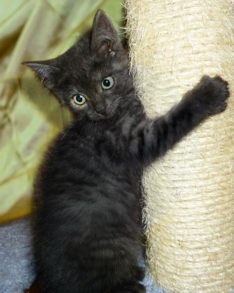 Котёнок мальчишка Брауни - чёрный дым ищет дом