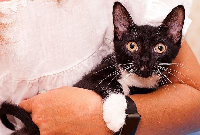 Изящный красавчик Максимильян в поисках дома. Котёнок, 4 месяца