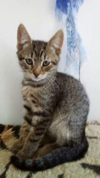 Два братца и сестра-пуховочка, котята, 3 месяца, в дар