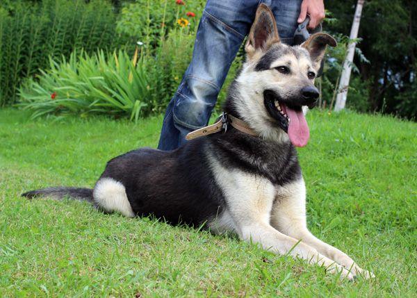 Обаятельнейший пёс Оскар в добрые руки