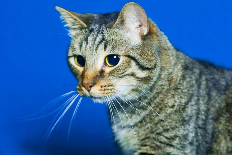 Годовалый котик Фунтик ищет хозяев