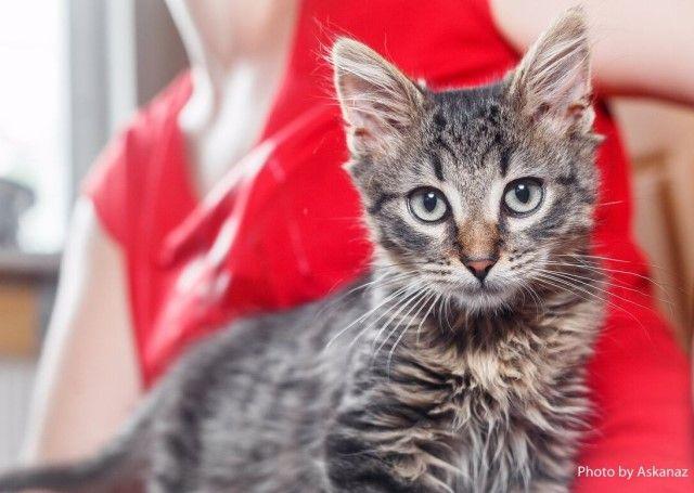 Полосатое чудо по имени Крош. Очень красивый пушистый котёнок в дар
