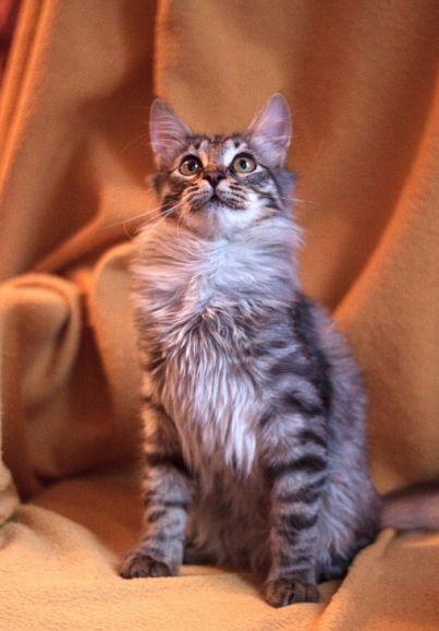 Котёнок Масик в добрые руки