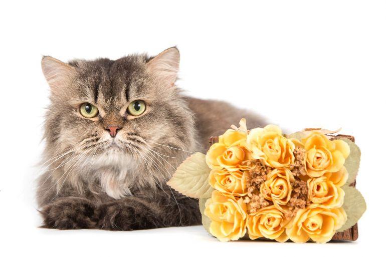Котик-умничка по имени Пушистик Пух