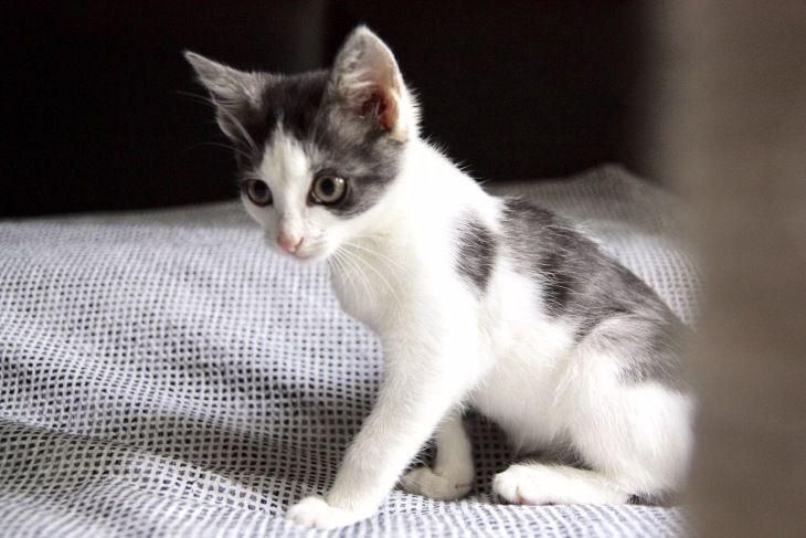 Чудесный котёнок Кэсси в добрые руки