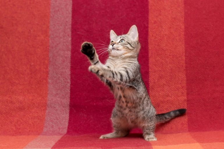 Котёнок Гретель в добрые руки