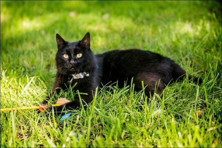 Шикарный чёрный кот в добрые руки