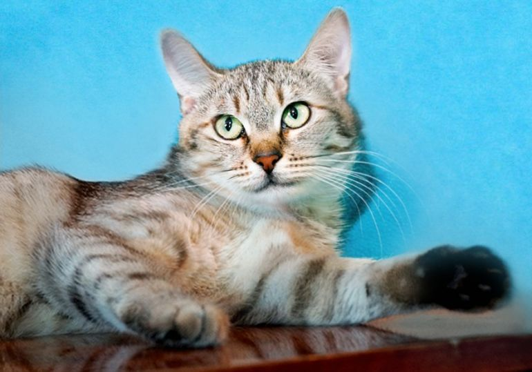 Кошечка-подросток Благуша ищет дом