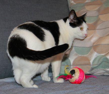 Самая добрая кошка ищет дом