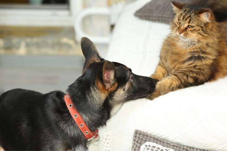 В дар щенок - игривая и обаятельная, 5 месяцев, Бася