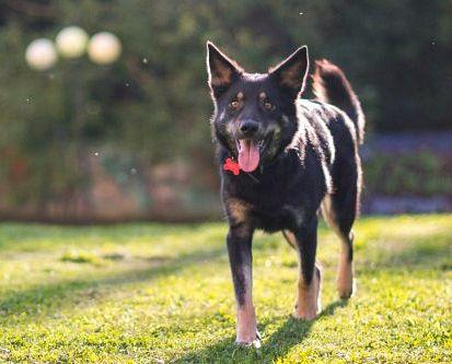 Нежная собачка Вега ищет дом