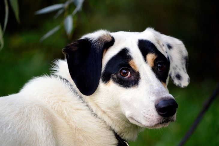 Молодой пёс Ульф ищет себе дом