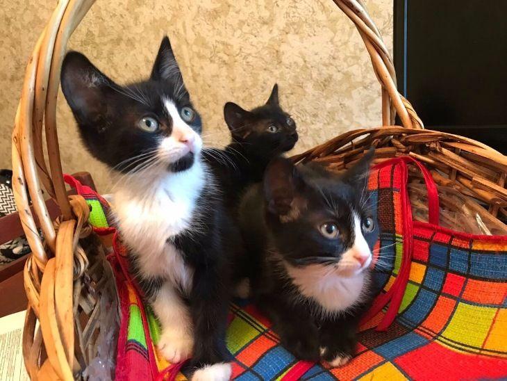 Отдам в добрые руки трёх котят