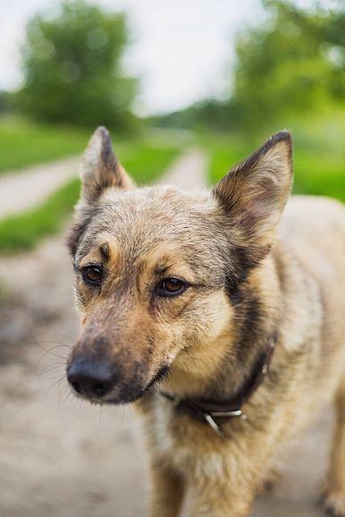 Активная  собака Дэйзи верит в свой счастливый билет