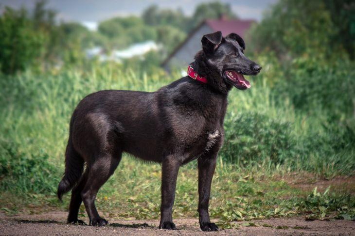 Чёрная собака в добрые руки