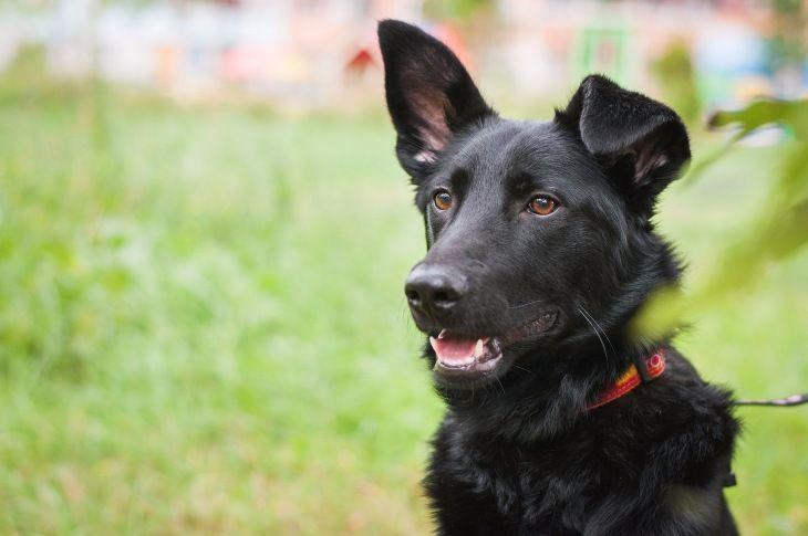 Красивый пес Кекс в добрые руки
