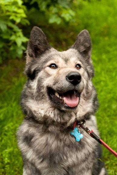 Красивая собака Луна в добрые руки