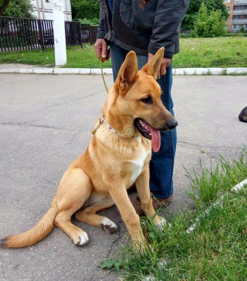 Очаровательный щенок Ася в добрые руки