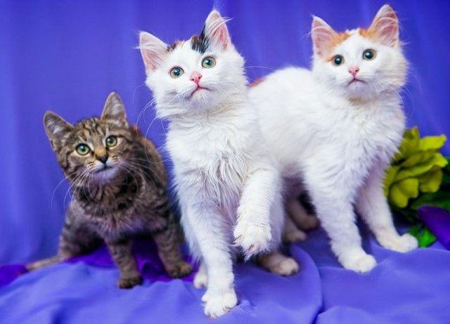 Разноцветные котята на любой вкус. 3 девочки и мальчик, в дар
