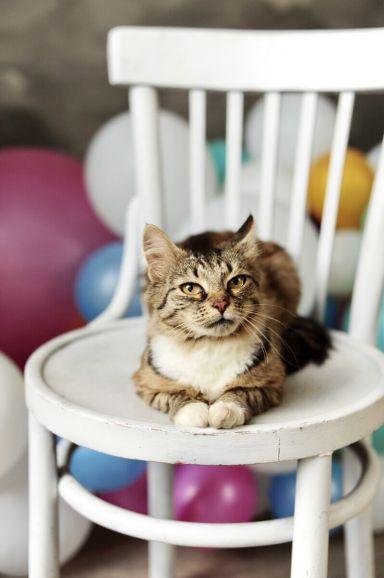 Чудесная кошка Фиша в добрые руки