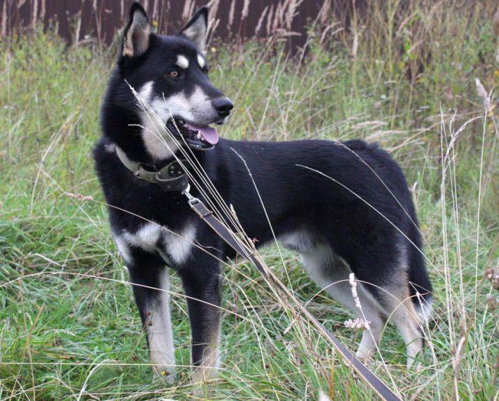 Лайк - пёс с золотым сердцем ищет дом