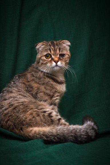 Плюшевая кошечка Котя (9 месяцев) в добрые руки