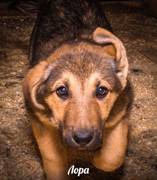 щенок Лора ищет семью