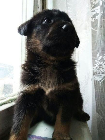Отдам щенка
